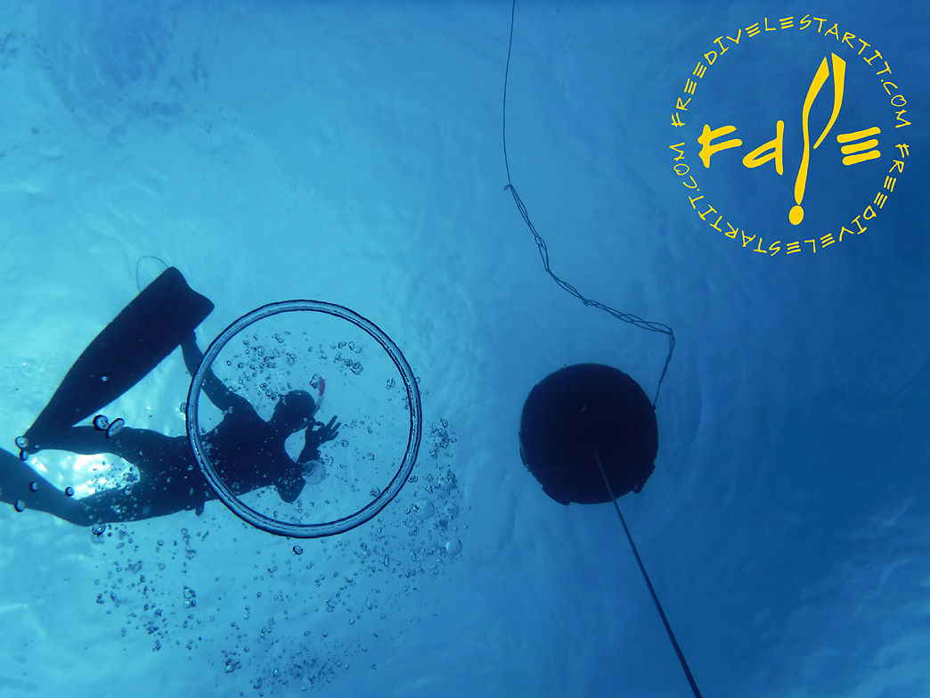 Course with all the levels, from beginner to freediving instructor
